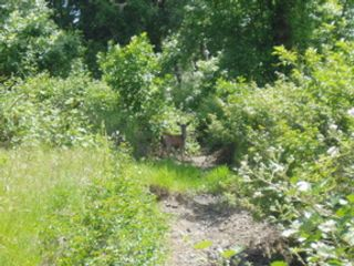 Studio,  0.00 BTH Land style home in Cave Junction
